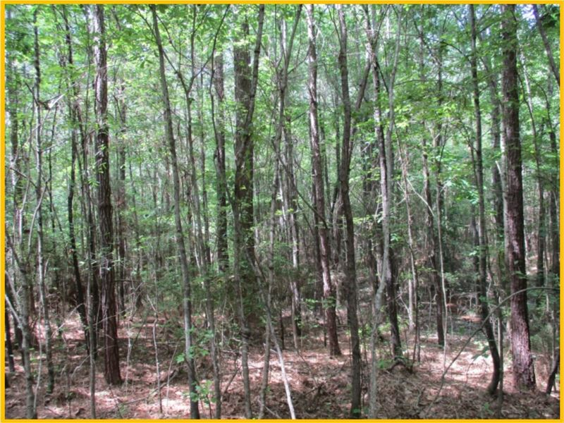 57 Acres In Webster County : Mathiston : Webster County : Mississippi