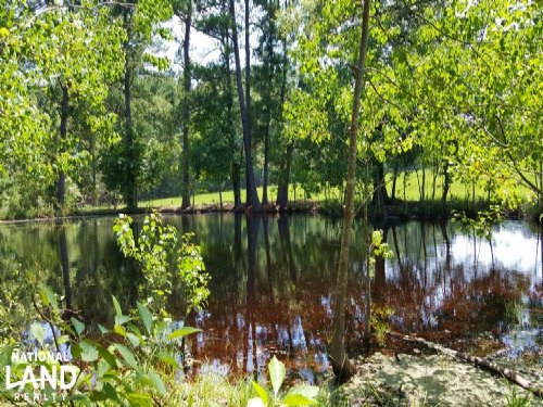 90 Acre National Forest Ranch/Inves : Apple Springs : Trinity County : Texas