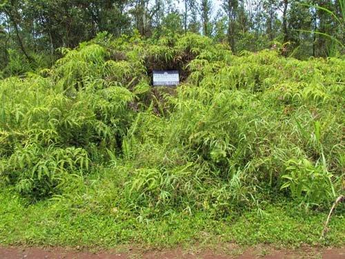Land For Sale, Close To Beach : Pahoa : Hawaii County : Hawaii