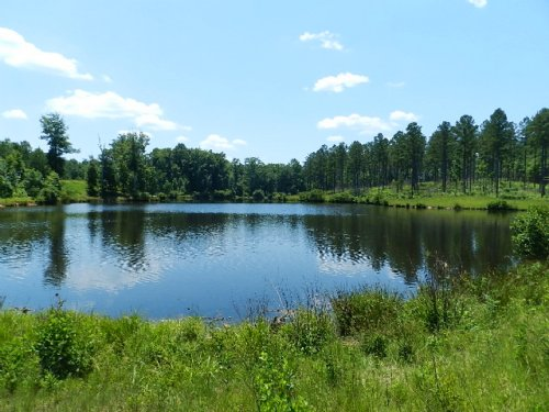Timber Investment With Pond : Musella : Crawford County : Georgia