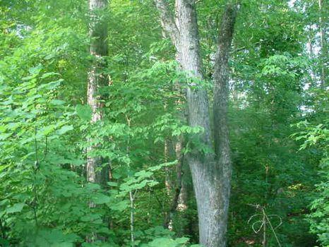 347.3 Acres : Washington : Wilkes County : Georgia