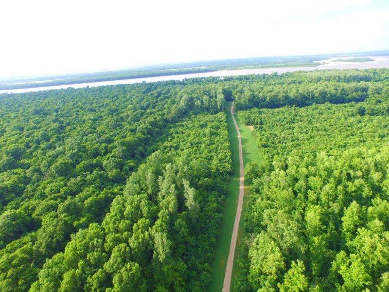 Black Bayou Hunt Club Equity Share : Benoit : Bolivar County : Mississippi
