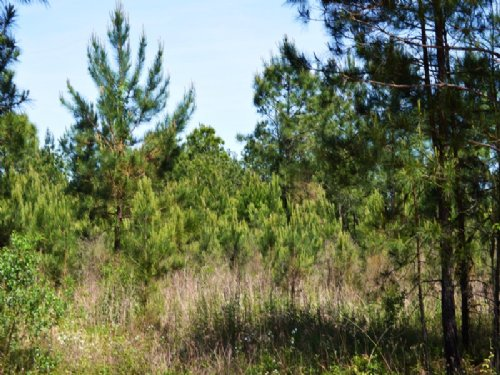 Beall Tract : Bonifay : Holmes County : Florida