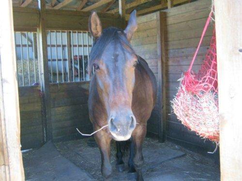 Horse Farm Tillable Farmland 74 Ac : Ira : Cayuga County : New York