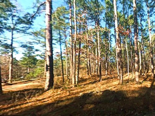 0.8 Acre Lot At Lake Bistineau : Ringgold : Bienville Parish : Louisiana