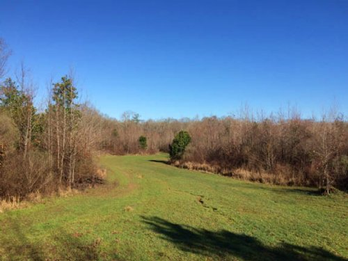 Hunting Land With Timber Creek Fron : Fayette : Jefferson County : Mississippi