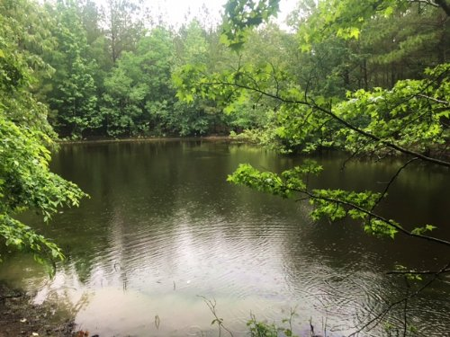 35± Acres : Columbia : Marion County : Mississippi