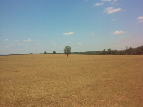 West Taylor Farm : Butler : Taylor County : Georgia