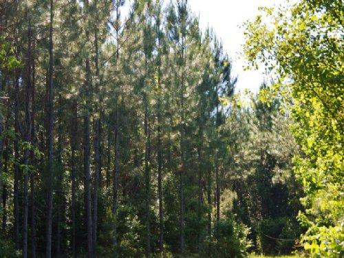 Peanut Road : Cottondale : Jackson County : Florida