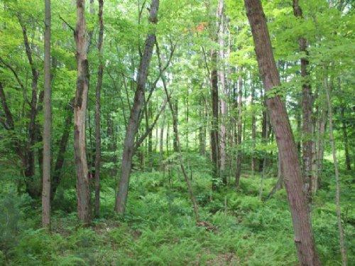 11 Acres Near Oneida Lake : Camden : Oneida County : New York
