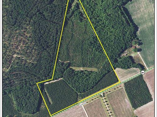 Watson Road Tract : Estill : Hampton County : South Carolina