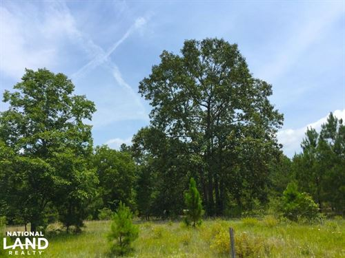 Highway 601 Recreational Homesite : Lugoff : Kershaw County : South Carolina