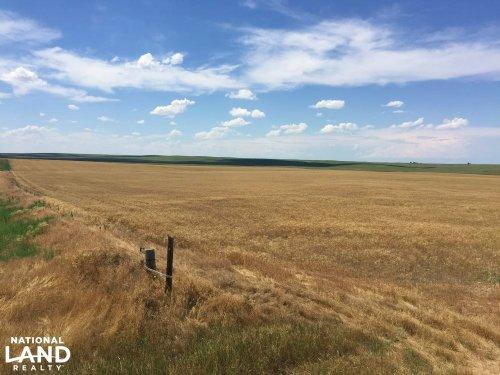 Kit Carson County Farmland/Cropland : Stratton : Kit Carson County : Colorado