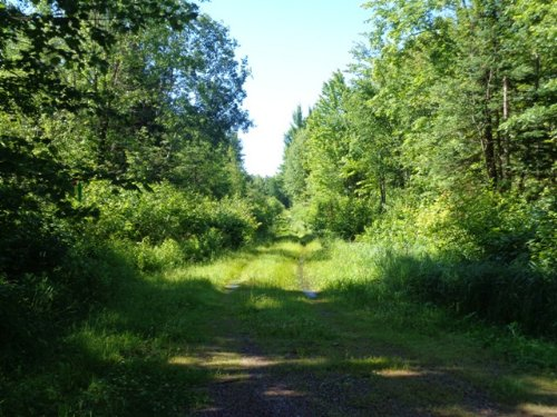 500 Acre Private & Wooded Parcel : Bradley : Lincoln County : Wisconsin