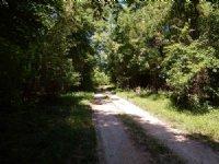 2575 Acres Washington Parish, La : Bogalusa : Washington Parish : Louisiana