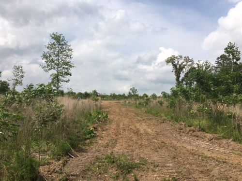 28.7 Acres On Riley Lane : Columbia : Marion County : Mississippi