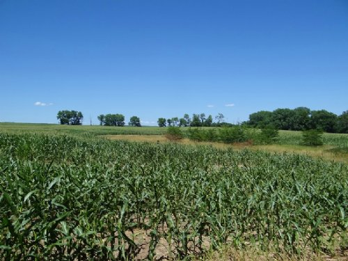 Derry Township Tillable Farm : Pittsfield : Pike County : Illinois