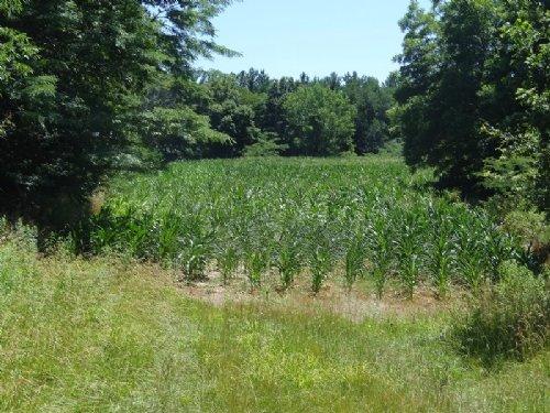 Big Buck Barn Farm : Pittsfield : Pike County : Illinois