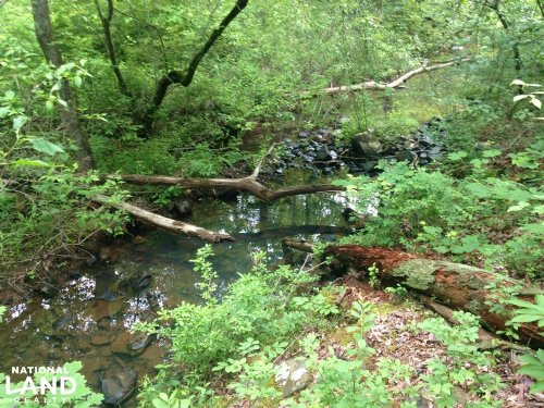 40 Acre Kryer Mountain Timber And W : Little Italy : Pulaski County : Arkansas