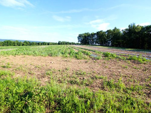 44 Acres Prime Real Estate : Benton : Columbia County : Pennsylvania
