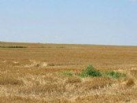 400 Acre Farm For Sale : Minneola : Clark County : Kansas