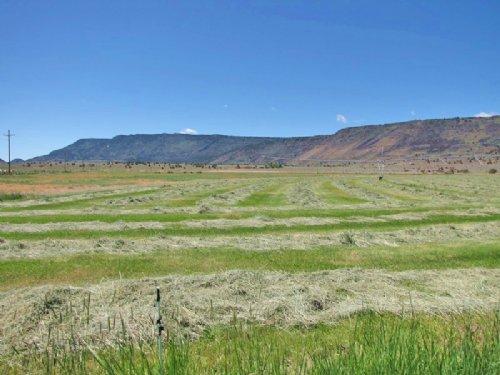 High Desert Cattle Operation : Plush : Lake County : Oregon
