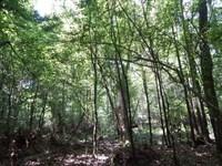 250 Acres With Spring Fed Creek : Mount Hermon : Washington Parish : Louisiana