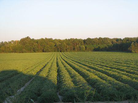 71 Acre Farm W/creek, Horses Dream : Millen : Jenkins County : Georgia