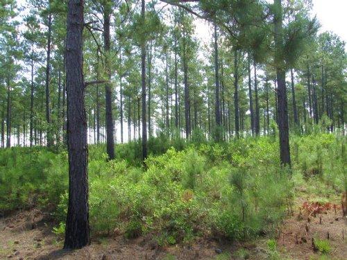 Tract 115 Millwood Plantation : Millwood : Ware County : Georgia