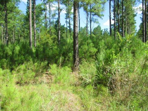 Tract 112 Millwood Plantation : Millwood : Ware County : Georgia