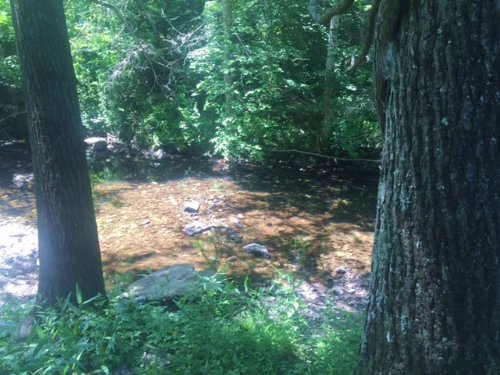 122.2 Hunting Property With Streams : Gruetli Laager : Grundy County : Tennessee