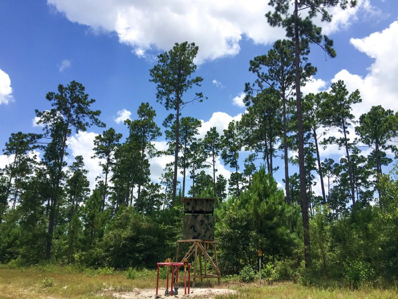 51 Acres Fm 1696 : Huntsville : Walker County : Texas