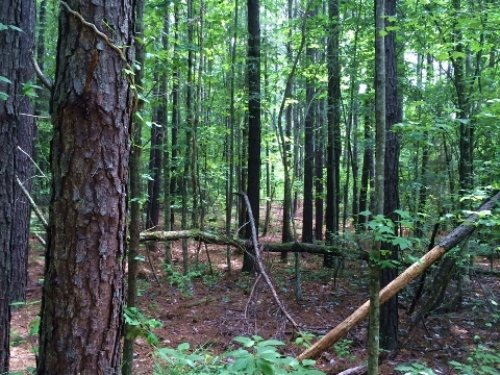 39 Acres For Sale : Quitman : Clarke County : Mississippi