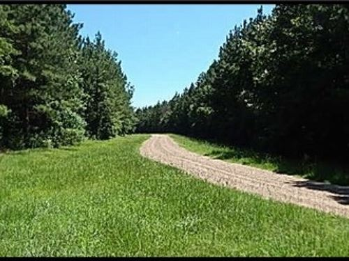 70 Acres In Rankin County : Lena : Rankin County : Mississippi