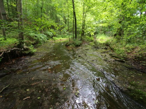 143 Ac With Crystal Clear Creek : Centerville : Hickman County : Tennessee