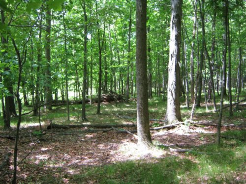 48 Acres Hunting Land Woodlands : Elmira : Chemung County : New York