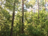 Fisler Tract : Currie : Pender County : North Carolina