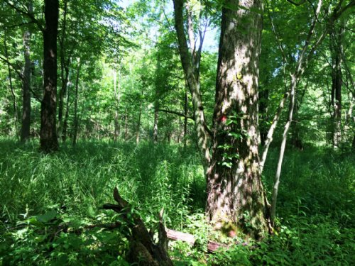 451 Acres Timberland With Financing : Cherry Creek : Chautauqua County : New York