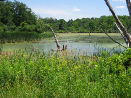 Large Recreational Pond 5 Acres : Dryden : Tompkins County : New York