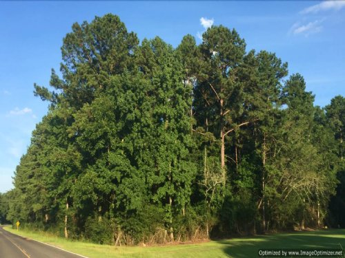 25± Acres : Brookhaven : Lincoln County : Mississippi