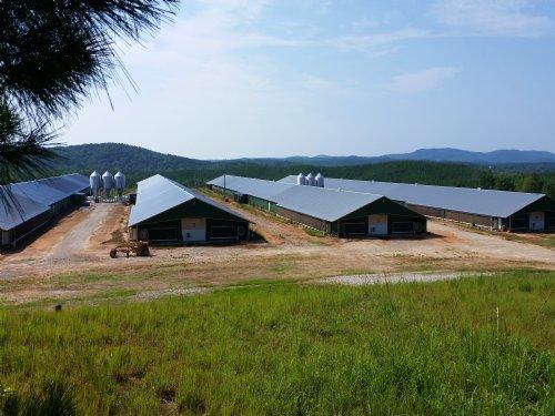 4 Mega House Poultry Farm 175+/- Ac : Heflin : Cleburne County : Alabama