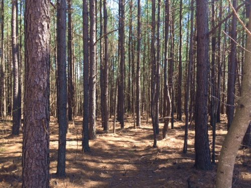 5.9+/-acres Wooded Lot : South Pittsburg : Marion County : Tennessee