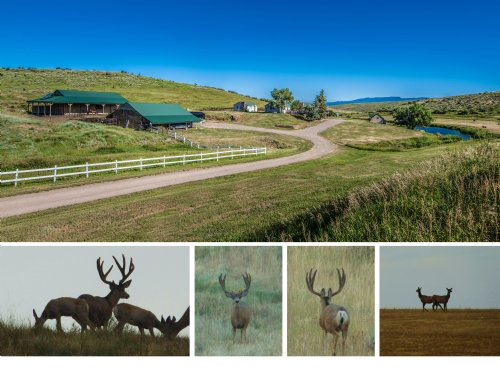 Shaw Ranch : Hayden : Routt County : Colorado