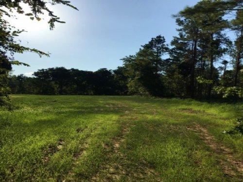 351 Acres In Yazoo County : Yazoo City : Yazoo County : Mississippi