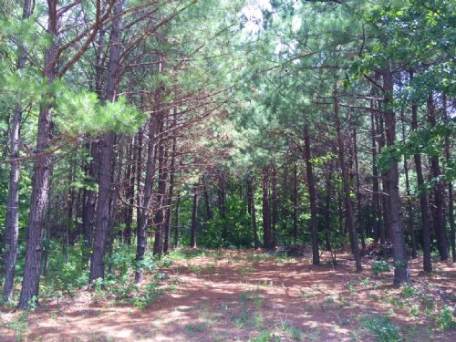 61.01 +/+- Wooded Acres, Bank Owned : Temple : Carroll County : Georgia