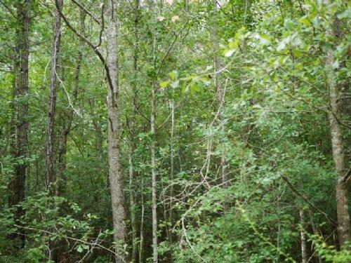 Buckhead Trail : Millen : Jenkins County : Georgia