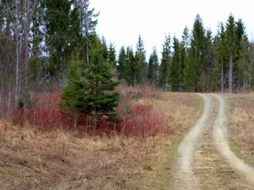 2.5 Acres Sunrise Estates, Electri : Mars Hill : Aroostook County : Maine