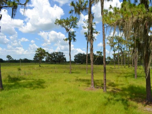 Fish Branch Acres : Zolfo Springs : Hardee County : Florida