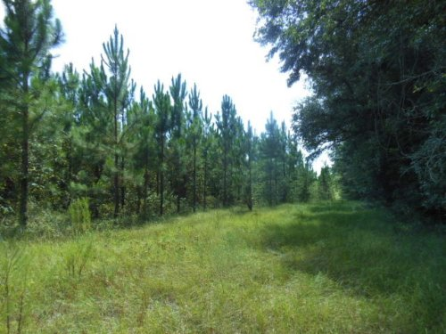 39+ Acres With Planted Pines : Live Oak : Suwannee County : Florida