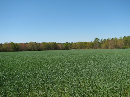 20 Acres +/- : Brooklet : Bulloch County : Georgia